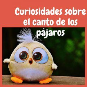 curiosidades sobre el canto de los pajaros pájaro de peluche