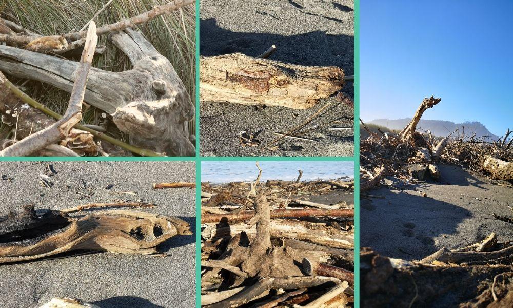 troncos playa con formas fantásticas