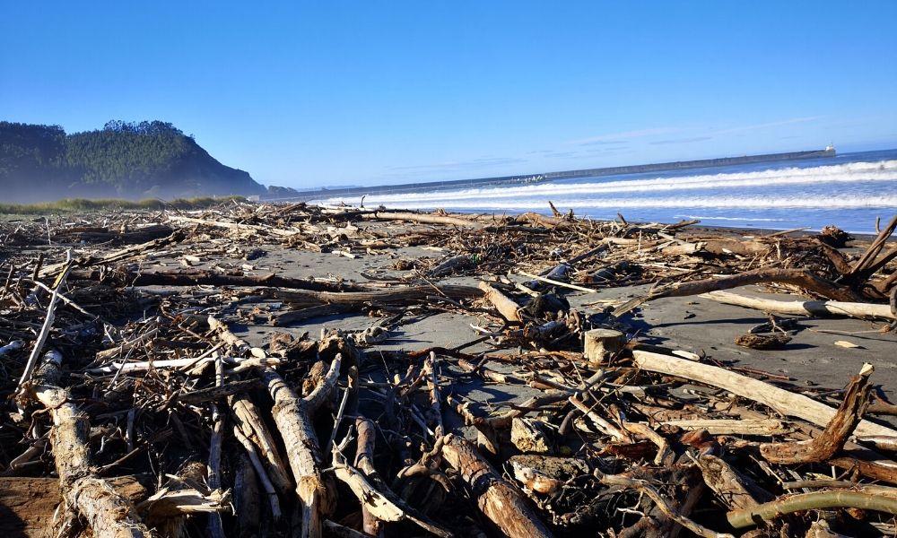 paisaje de playa con troncos tirados