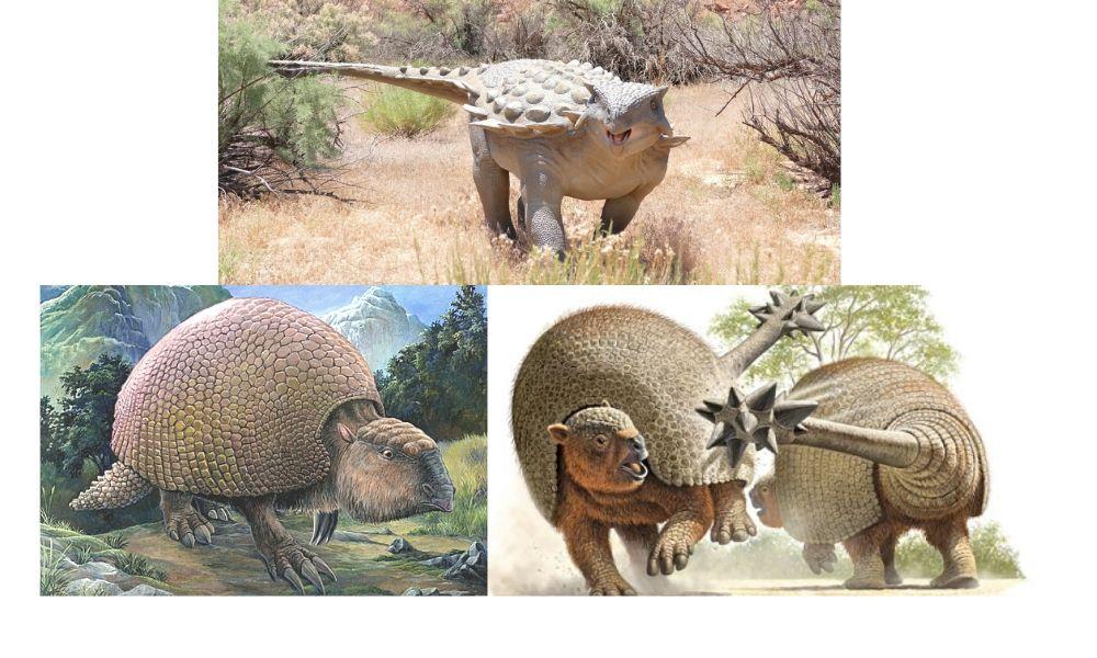 ankylosaurus, gliptodon y doedicurus