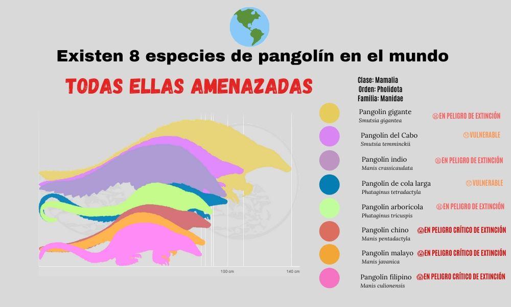 silueta de las 8 especies de pangolín amenazadas y esquema de nivel de peligro de extinción