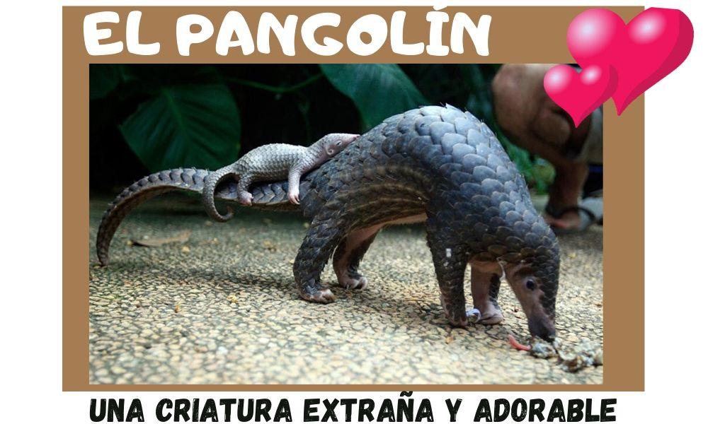 cria de pangolin a lomos de mama pangolin