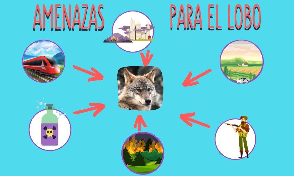 esquema visual de las amenazas para el lobo: incendios, envenenamiento, caza, ocupación del territorio.