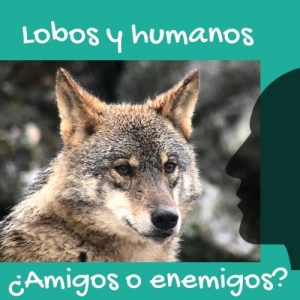lobo iberico y perfil de humano