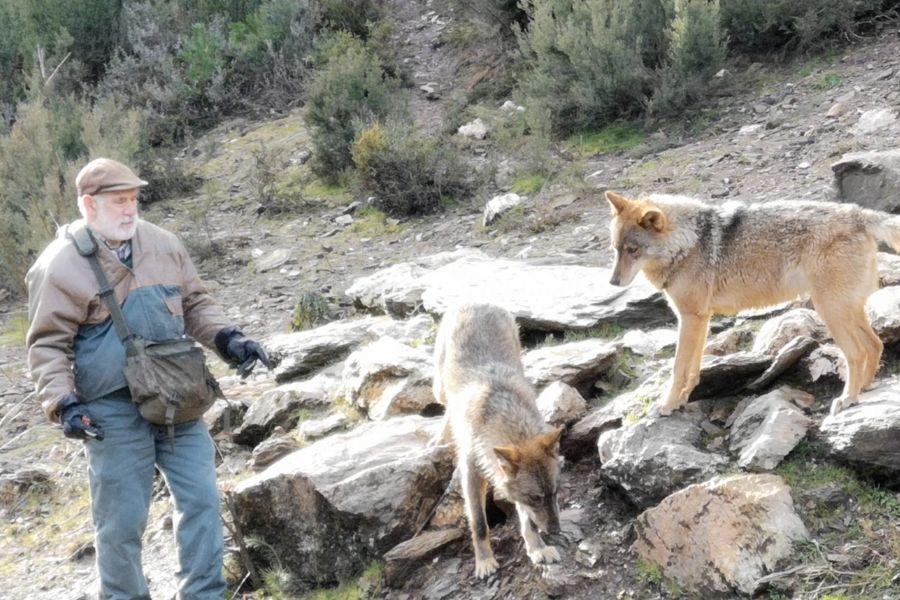sesion de manejo Centro del lobo Ibérico de Castilla y León