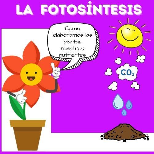 dibjo de flor en maceta y agua, tierra, gas y sol